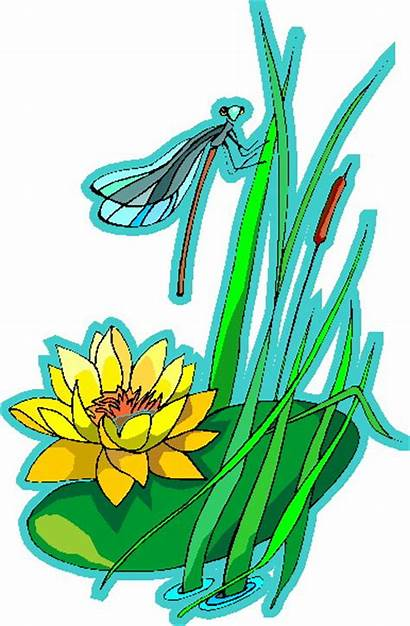 Water Clip Lily Clipart Plants Lilies Animated