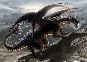 Black Dragon   www.imgkid.com - The Image Kid Has It!