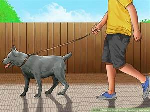 How to Start a Dog Walking Service (with Pictures) - wikiHow