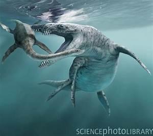Mesozoic Marine Reptiles