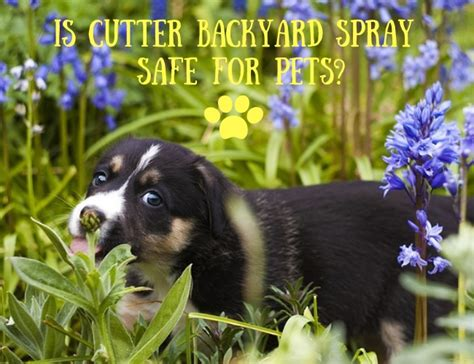 Cutter Backyard Bug Safe For Pets by Is Cutter Backyard Spray Safe For Pets