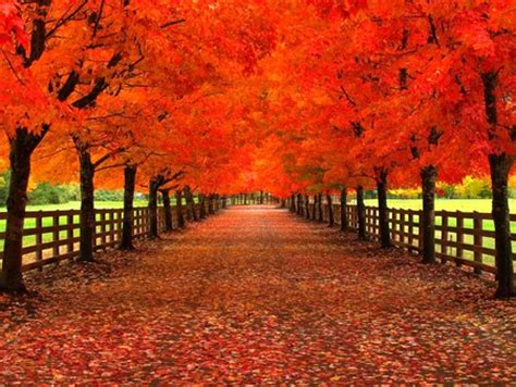 red trees  nature background wallpapers