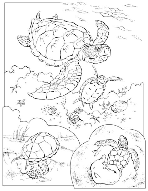 coloring book animals    projectscrafts turtle