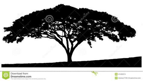Silhouette Of The Tree-acacia Stock Photo