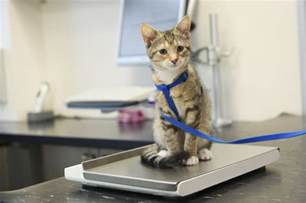 cat vet of south 8 signs your cat needs to see a veterinarian adventure cats