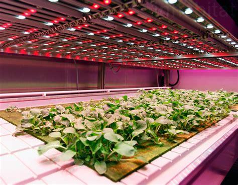 indoor farming led lights philips new growwise indoor farm will revolutionize food