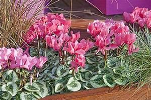 Fleur D Hiver Pour Jardinière : choisir les fleurs pour une jardini re d 39 automne ~ Dailycaller-alerts.com Idées de Décoration