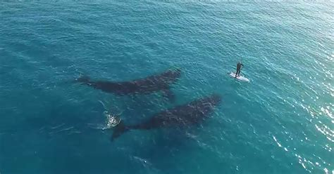 breathtaking drone footage  whales deciding