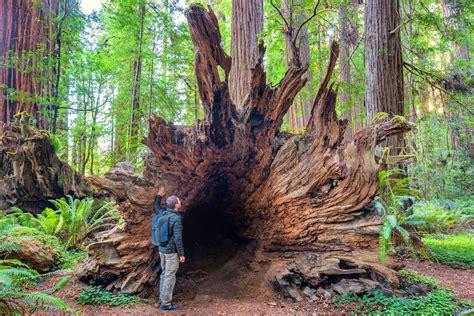 Vote Jedediah Smith Redwoods State Park Best State