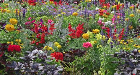 annual flower ideas annual flowerbed combintions for sun