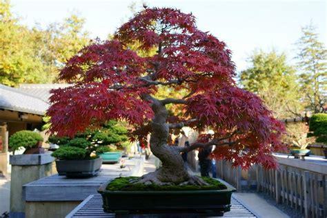 arrange  japanese garden choosing