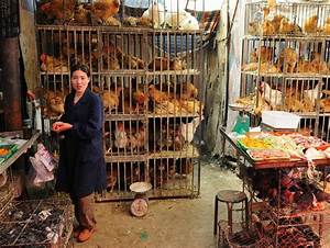 New H7n9 Bird Flu Threats In China  Q U0026a With One Health
