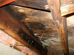 Repairing sagging floor joists girders in your crawl for How to dry wet wood floor