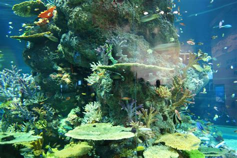 the sea aquarium file strait of malacca and andaman sea s e a aquarium marine park resorts world sentosa