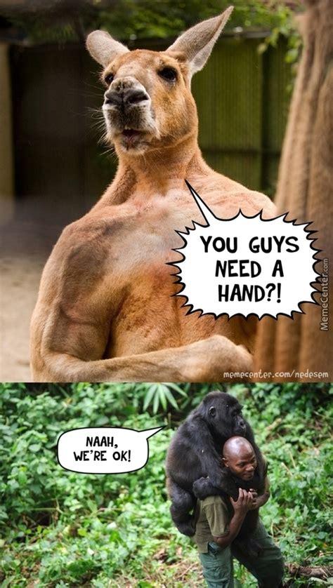 Kangaroo Meme - kangaroo memes best collection of funny kangaroo pictures
