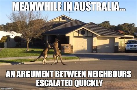 Australian Memes - 11 kangaroo memes sure to make you laugh every time