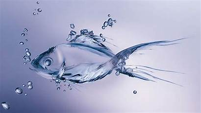 Fish Water Background Wallpapers Moving 3d Ultrawide