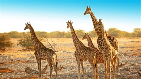 Walking Safari In Etosha National Park