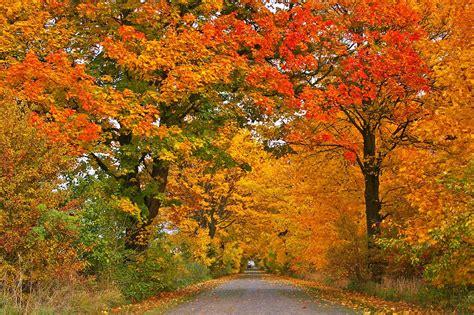 kostenlose bild forststrasse asphalt landschaft natur