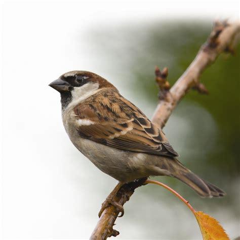 bird finder bird info farbrook farm