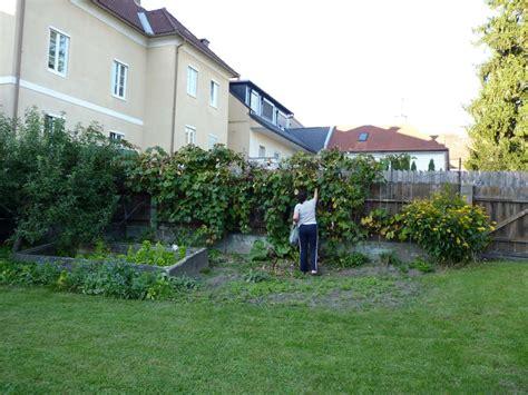 Bad St Leonhard News Vom Raunzer Weinernte Mitten In Bad