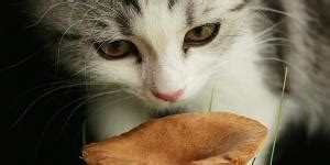 are christmas trees poisonous to cats are plants poisonous to dogs and cats