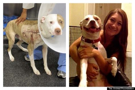 Ee  Rescue Ee    Ee  Dogs Ee   Before And After P Os Prove Love Is All You