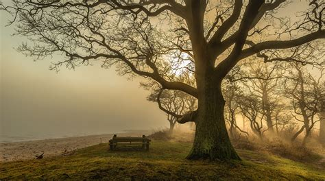 wallpaper fog beach nature trunk tree bench branches trees