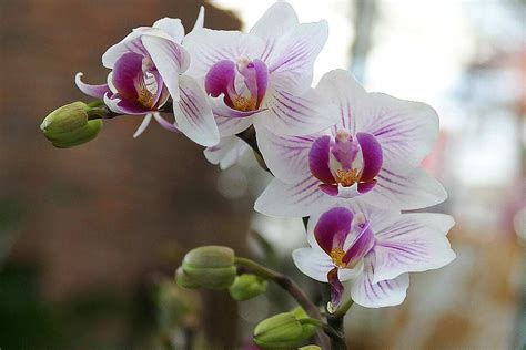 Große Auswahl An Orchideen In Hamburg Garten Von Ehren