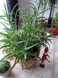 Plante Suspendue Intérieur : plantes grasses d interieur ~ Teatrodelosmanantiales.com Idées de Décoration