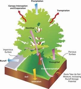 Benefits Of Street Trees  Urban Tree Benefits