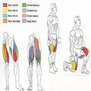 Walking Lunges Muscles Worked   www.pixshark.com - Images ...