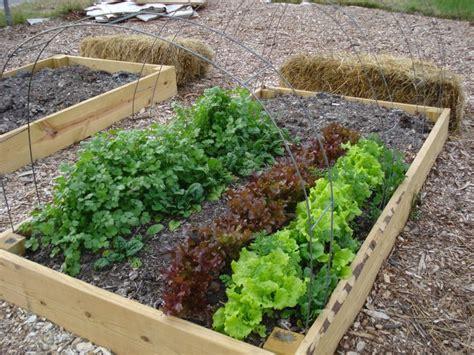 Fare Un Orto In Giardino by Come Fare L Orto Guida Passo Passo Su Come Realizzare Un