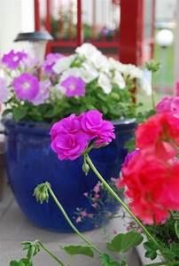 les plus beaux fleurs de balcon en 47 images With idee amenagement jardin avec piscine 9 la piscine 224 debordement belles piscines de luxe