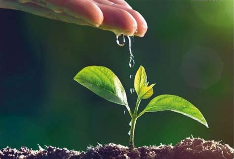 Gartenbau Der Zukunft by Zukunft Gartenbau Jetzt Herunterladen Kategorien