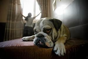 Hotel Pour Chien : un h tel luxe spa pour chiens paris jamais sans maurice ~ Nature-et-papiers.com Idées de Décoration