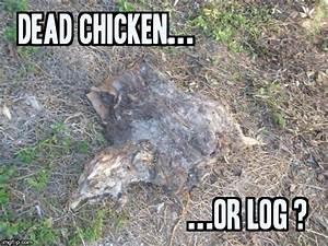 chicken joke - Imgflip