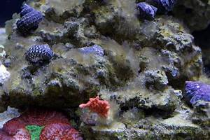 How To Eliminate and Prevent Diatoms in a Reef Tank - ReefBum