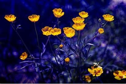 Purple Yellow Flowers 4k 5k Wallpapers Buttercups