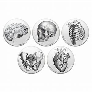 Vintage Anatomy Pinback Buttons