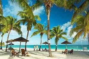 Bilder Von Palmen : paradiesischer palmen strand pineapple beach club adults only dian bay holidaycheck ~ Frokenaadalensverden.com Haus und Dekorationen