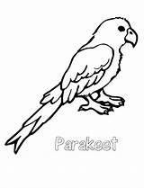 Coloring Parakeet 788px 93kb Drawings sketch template