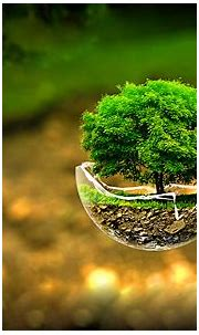 3D Nature Images HD with Flying Tree on Broken Glass - HD ...
