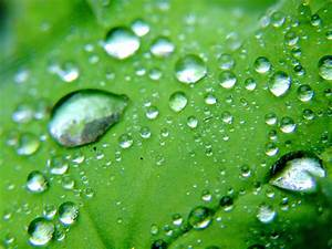 Water drops on green leaves | Water drops on green leaves ...