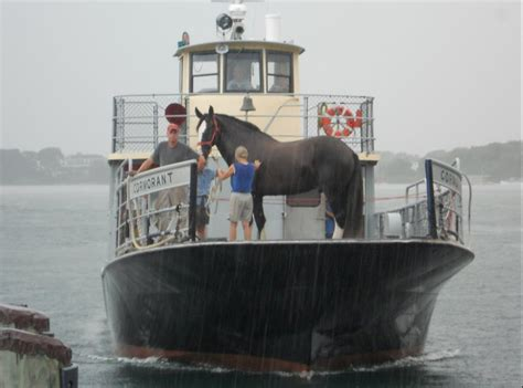 Horses On A Boat by Draft On Boat And