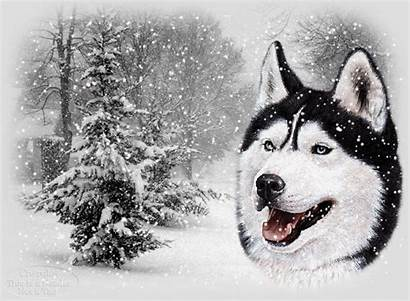 Snow Wolf Animated Christmas Fall Scene Husky