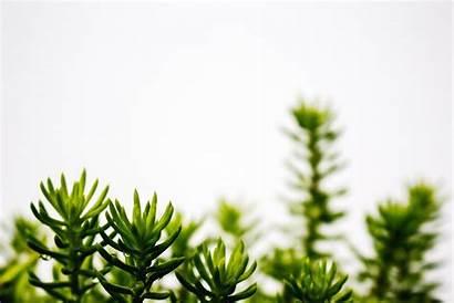 Plant Computer Wallpapers Desktop Aesthetics Zoom Background