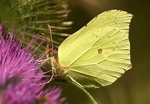 Schmetterlinge überwintern Helfen : heimische tiere im garten berwintern lassen ~ Frokenaadalensverden.com Haus und Dekorationen