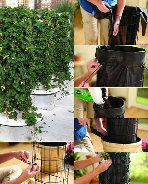 Erdbeeren Pflanzen In Diy Containers So Gehts by Erdbeeren Pflanzen In Diy Containers So Geht S Garten