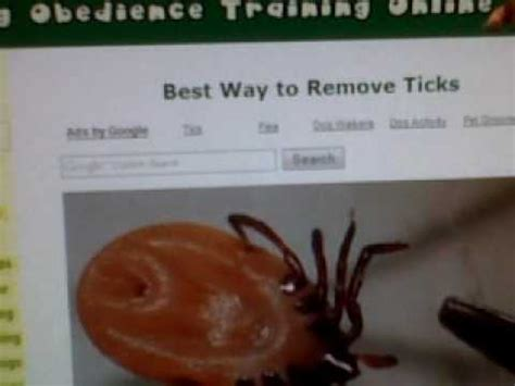 home tick removal discover the best way to remove ticks from dogs